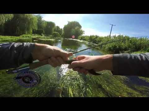 Fly Fishing On The Great Stour In Canterbury