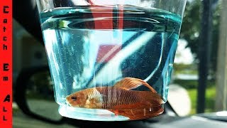 FISH Get a Second CHANCE at LIFE!