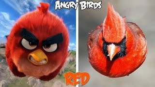 Angry Birds Characters In Real Life