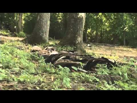 TWRA: Pesticide Caused Duck Deaths