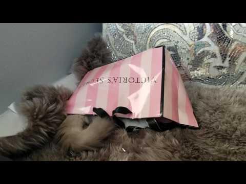 Ragdoll Kitten Playing in Shopping Bag