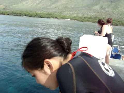 Seal in Hawaii Sea