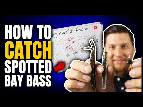 How To Catch Spotted Bay Bass Walk Through