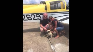 Dfw Pug Rescue - Bocce