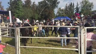 Pleito en concurso de Caballos Bailadores en Ayotlan Jalisco
