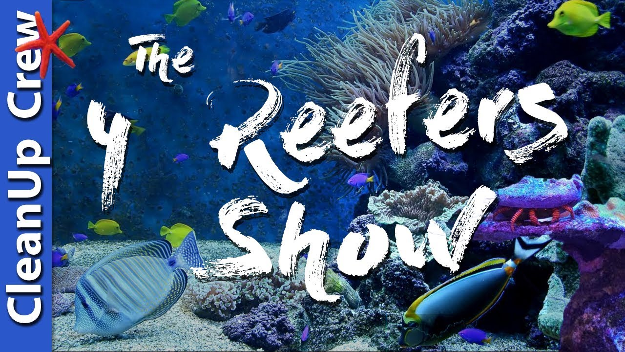 clean up crew for a saltwater tank the 4 reefers show episode 3