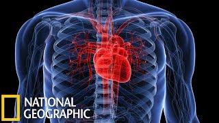 Секреты нашего сердца (National Geographic HD)