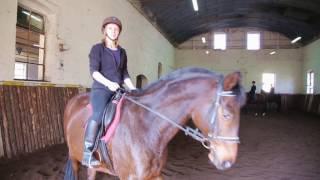 Zawód technik hodowca koni w Krzyżowicach