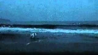苦手だった海。ジョジョをおいかけて、一生懸命、海にはいっていきまし...
