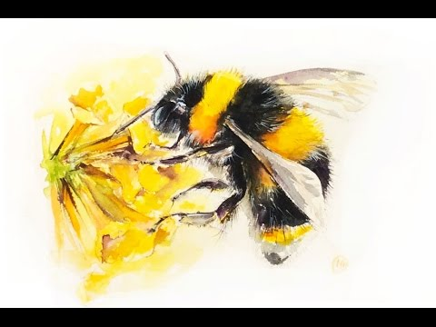 Watercolor Bumblebee Painting Demonstration