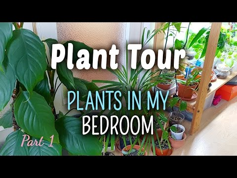 Plant Tour PART 1 | Plants in my Bedroom - 04.05.2017