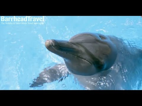 Swimming with Dolphins | Dubai 2018 / 2019