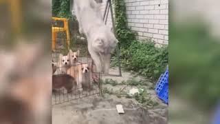 Cute Is Not Enough 🔴 Funny Cats and Dogs Videos Compilation 2019 Perros y Gatos Recopilación 43