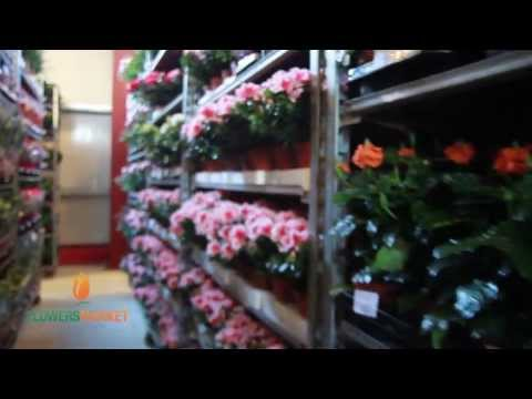 FLOWERS MARKET HOLLAND  Grand Opening 17.06.2013