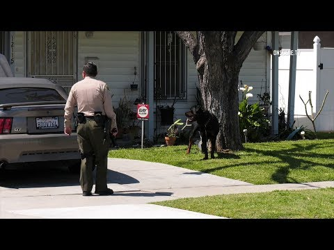 Rottweiler Mauls 2-Year-Old & Father In Broad Daylight In Norwalk