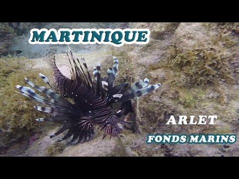 MARTINIQUE : Fonds marins