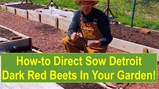 How-to Direct Sow Detroit Dark Red Beets in Your Vegetable Garden