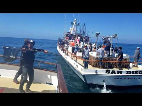 Pacific Voyager 3 Day San Diego Jun 8 2018 Bluefin Tuna, Yellowtail, Calico