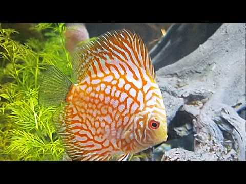 How To CHANGE GRAVEL In Aquarium!!