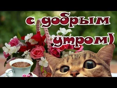 С Добрым Утром САМЫЕ КРАСИВЫЕ пожелания доброго утра для друзей МУЗЫКАЛЬНАЯ ОТКРЫТКА