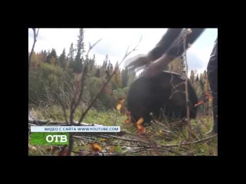 Рыбалка в Кушве Мс Чес и другое - О Нашем канале на  YouTube
