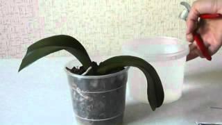 Уход за орхидеями-лечение корней  фаленопсис.(, 2012-07-21T17:16:22.000Z)