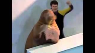 "Walrus Plays ""Tequila"""