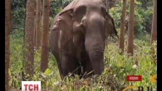 Японські зооактивісти розгорнули боротьбу довкола найстаршої в країні самиці слона(, 2016-02-04T07:28:30.000Z)