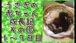うさぎのハーネス屋さん【三月うさぎ】の小太郎店長とこひな副店長が、2...
