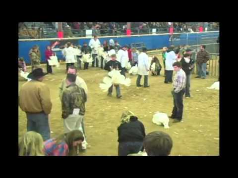 Junior Market Poultry Show - Broadcast - Competitive Events Rodeo Austin