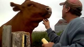 Hokey Eating Sweet Corn