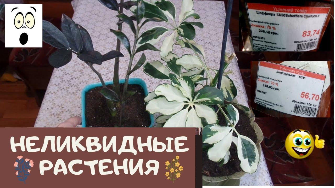 Я в ШОКе от неликвидных растений с Эпицентра, они просто гарнюни  и погибать вовсе не собирались