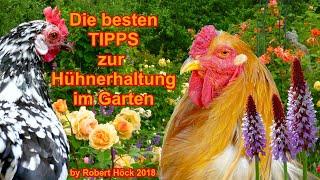 Die besten Tipps für die Hühnerhaltung im Garten - mit der HAPPY HUHN PHILOSOPHIE von Robert Höck