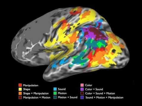 Concept Representation in the Human Brain