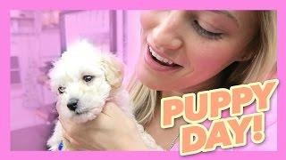Cutest puppy video ever! | iJustine