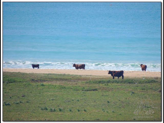 Road trip por la costa de Cádiz. Visita a Zahara de los Atunes, Barbate y Tarifa. Andalucía España