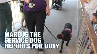 Pediatric hospital welcomes new service dog, Marcus