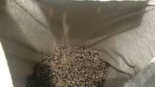 Ядро подсолнечника (Sunflower kernel)