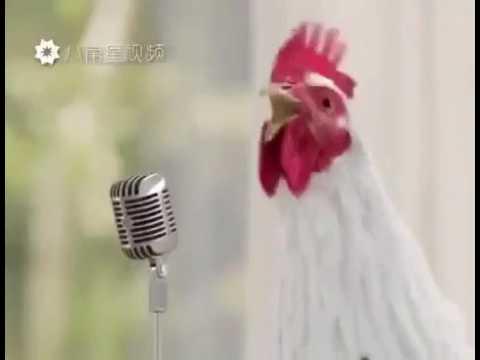 Песня кукареку