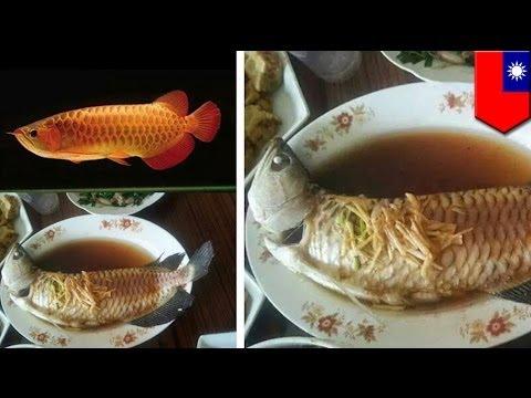 Elderly woman cooks grandson's US$3,000 pet fish
