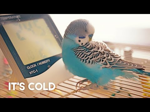 Vailpuna   Full Video   Aman Dhaliwal Ft Jasmeen akhtar   Music Birds Records   Latest Punjabi Songs from YouTube · Duration:  3 minutes 58 seconds