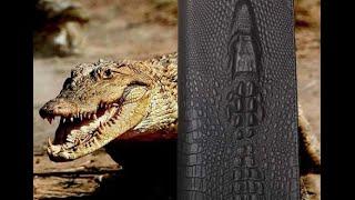 Портмоне Аллигатор Wild Alligator(, 2015-12-29T17:02:45.000Z)