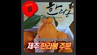 제주 한라봉 선물세트_ 수정농장 추천합니다.