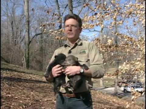 Living With Black Bears In Virginia
