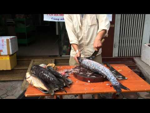 Mổ cá Trắm Đen sông Đà tại Hanoi Green