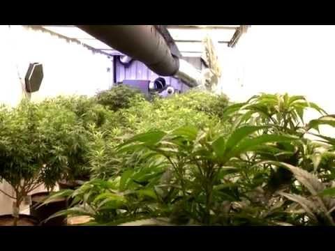 Marijuana job opportunities budding in Moncton