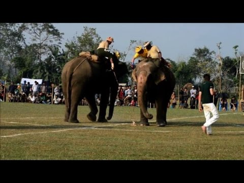 Polo com elefantes?