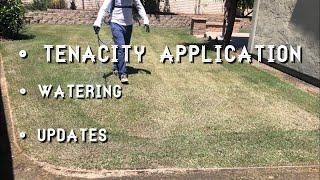 Tenacity herbicide spring video