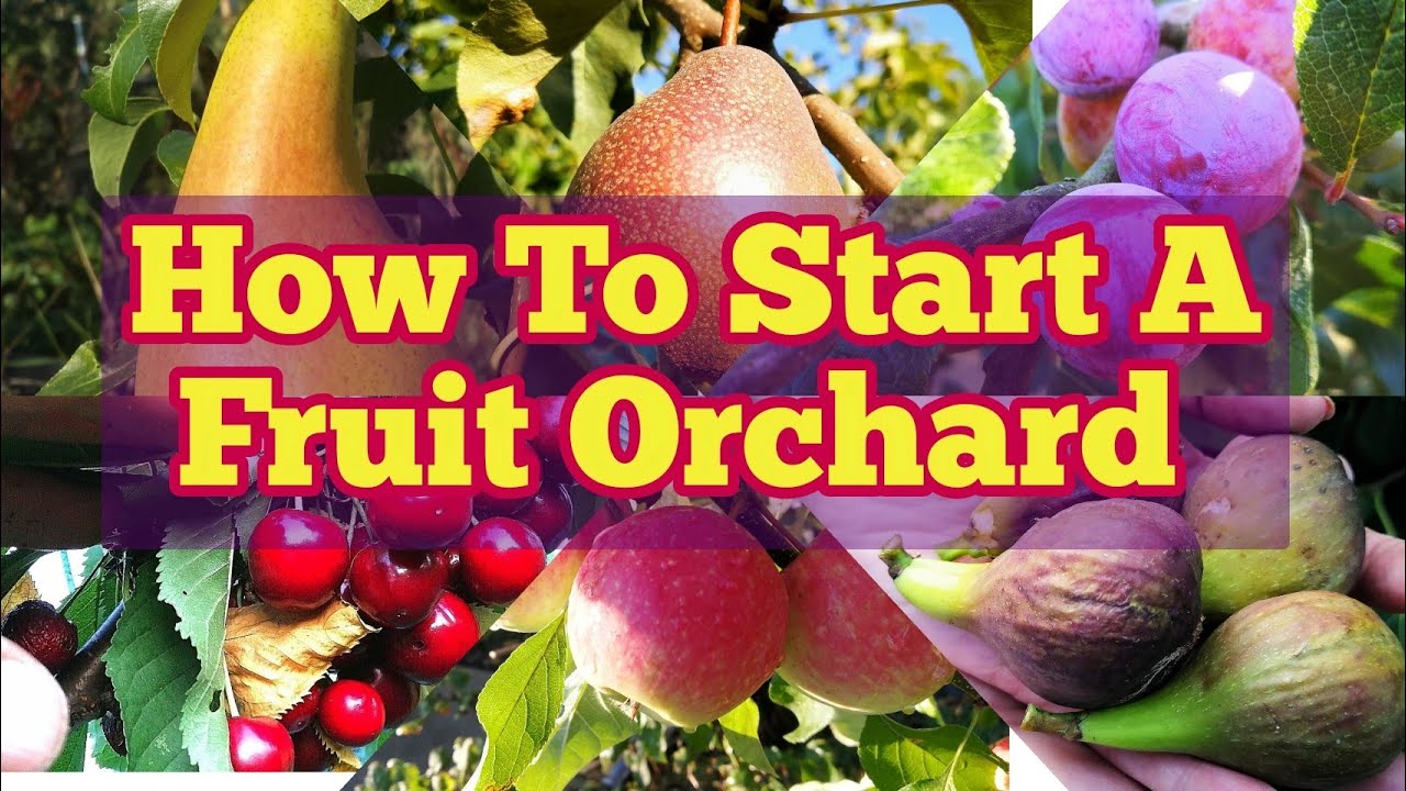how to plant fruit trees and create an orchard the ultimate guide