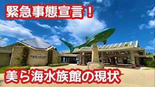 沖縄県の緊急事態宣言により、8月2日より閉鎖されている美ら海水族館の現状を撮影した動画です。現在、美ら海水族館内は、閉鎖中ですが、水族館がある海洋博公園 ...